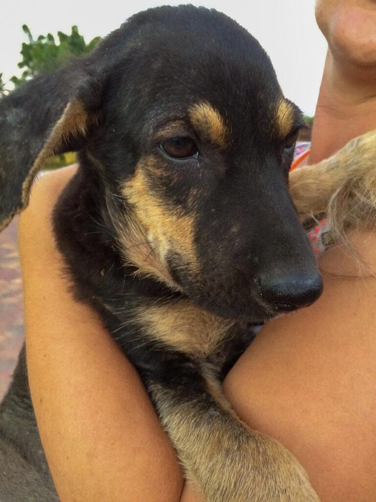 teddy as a puppy